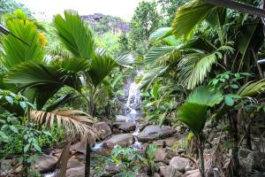 Seychellen: grünes Landesinnere