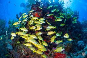 Riffe von Cozumel
