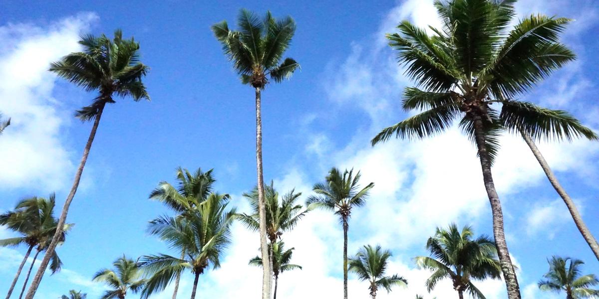 Seychellen - Unter Palmen