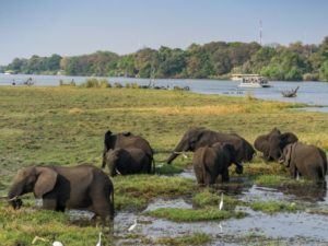 Chobe Nationalpark Elefanten