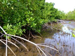 Mangroven Naturpark
