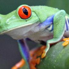 Costa Rica – warum man an die reiche Küste reisen sollte.