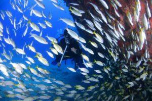 taucher-inmitten-von-fischschwarm