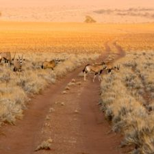 Namibia – Roadtrip für Afrika-Einsteiger