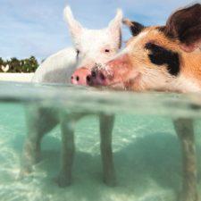 5 Gründe, warum die Bahamas eins der besten Urlaubsziele für Familien ist!