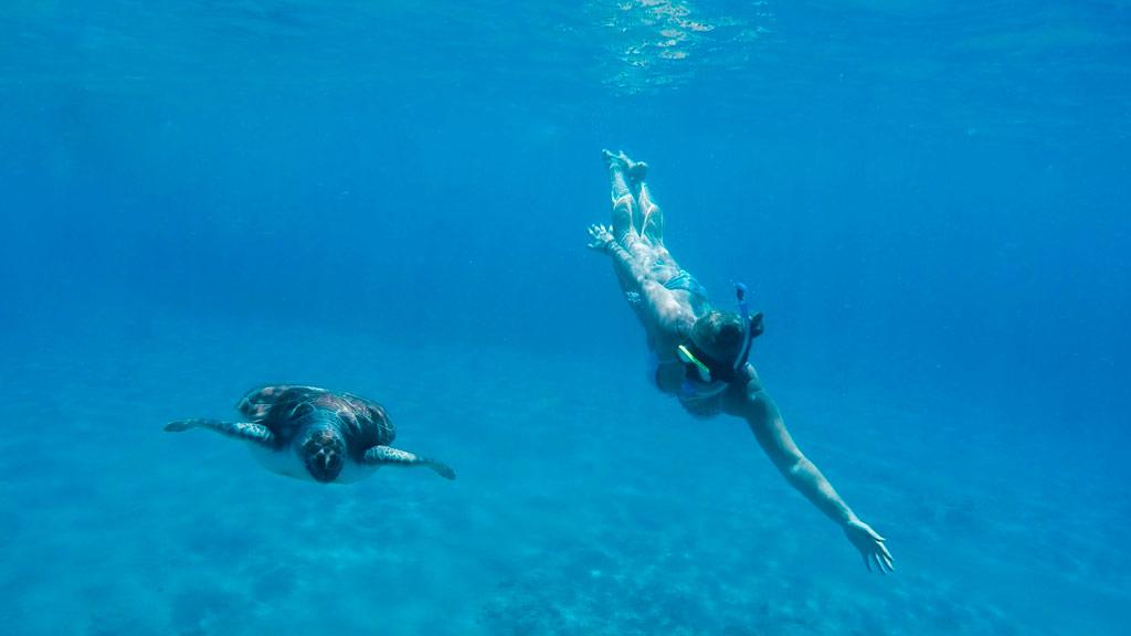 Curacao, tauchen, schnorcheln, Meeresschildkroete