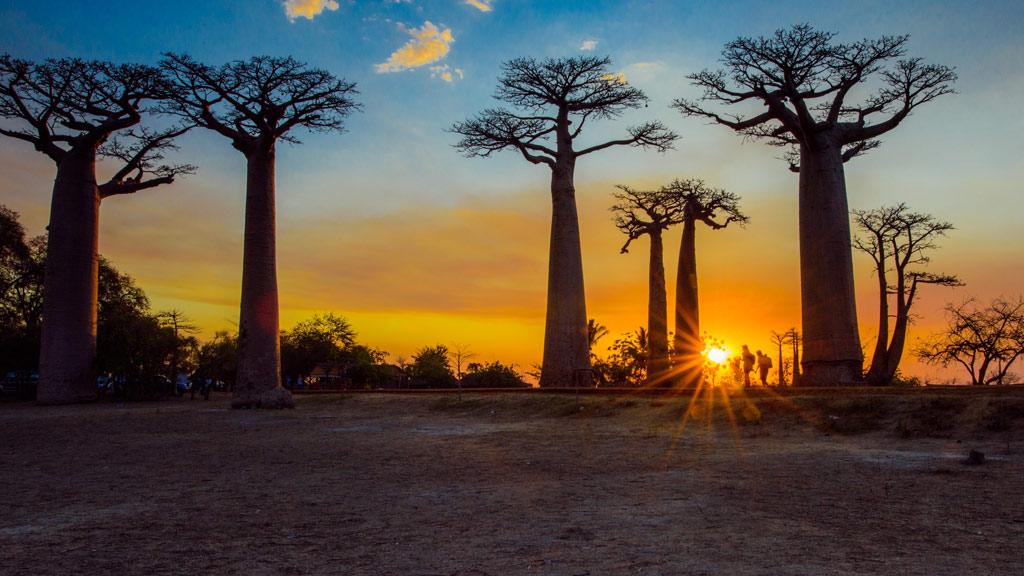 Baobab Allee auf Madagaskar